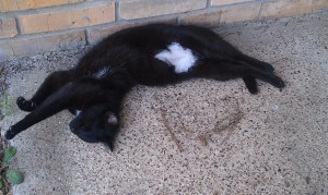 My Cat, Midnight, Sleeping